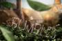 Bsd Bumbles Name Shot