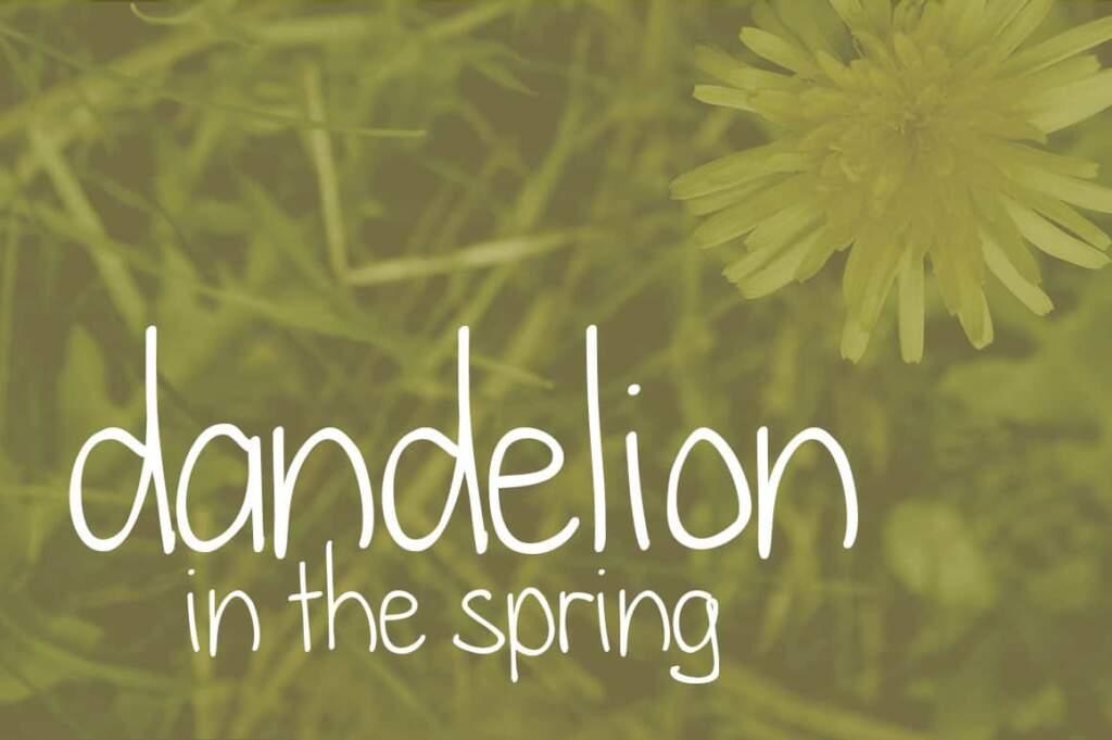 Dandelion In The Spring